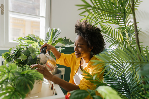 Photo of a young African American woman, taking care of her houseplants