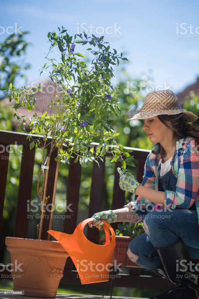 Taking care of my plants stock photo