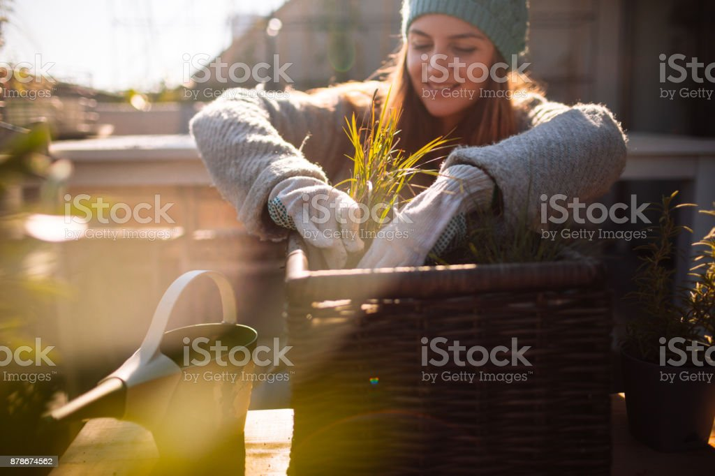 Taking care of my rooftop garden stock photo