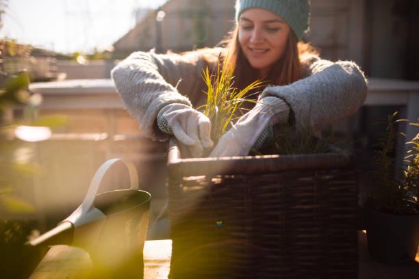 cuidar de mi jardín en la azotea - jardinería fotografías e imágenes de stock