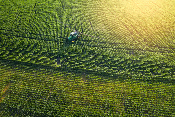 Taking care of the Crop. Aerial view of a Tractor fertilizing a cultivated agricultural field. Tracking shot. Drone point of view of a Tractor spraying on a cultivated field. Small Business. cultivated land stock pictures, royalty-free photos & images