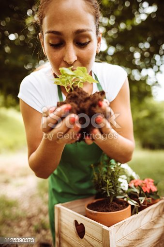 taking care of the plant