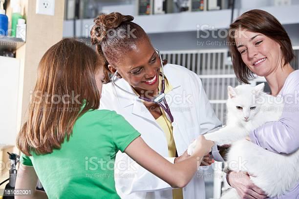 Taking cat to the vet picture id181052001?b=1&k=6&m=181052001&s=612x612&h=dd nfm6ar4z8dodxz puhahms v7a82hxnctcm4w3a0=
