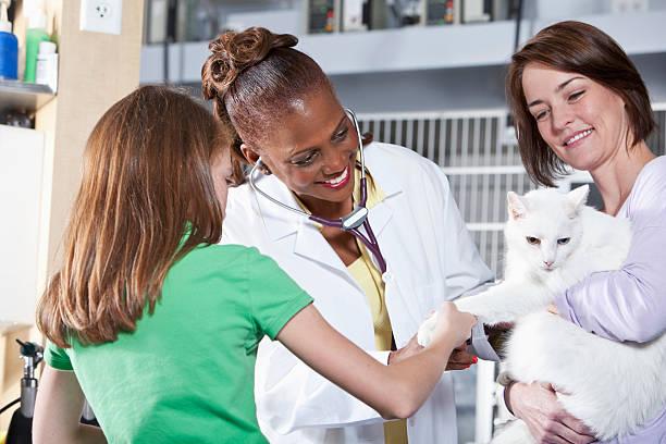 Taking cat to the vet picture id181052001?b=1&k=6&m=181052001&s=612x612&w=0&h=lvnzoxwwb t8 sulax tl1myjdx8qx0jlnwgatfncte=