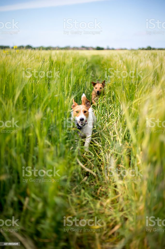 Taking Chase stock photo