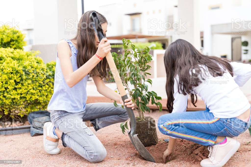 Female gardeners digging a hole in the ground with shovel before...