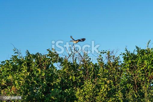 istock Taking Flight 1002194978