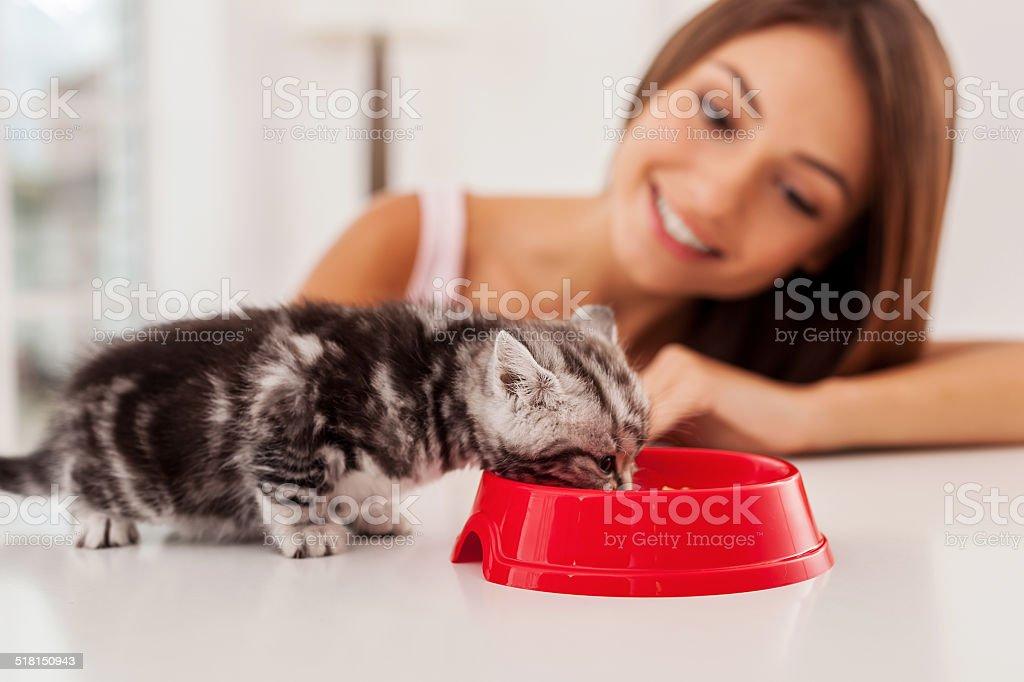 Taking good care of her pet. stock photo