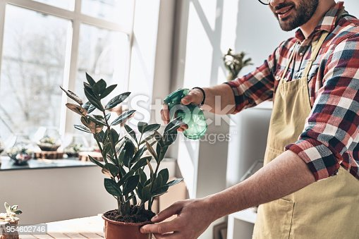 Close up of young man in apron watering potted plant while standing in small garden center