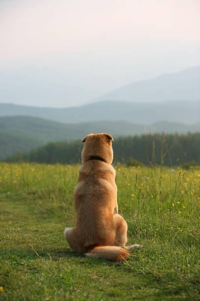 taking in the view