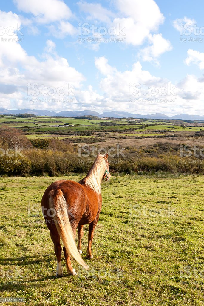 Taking in the view-beautiful pony looking into  distance. royalty-free stock photo