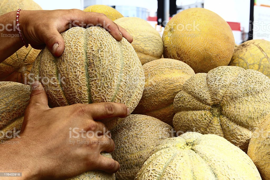 taking melons royalty-free stock photo