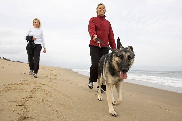 Taking my owners for a walk picture id173590437?b=1&k=6&m=173590437&s=612x612&w=0&h=wcbrcjmmiqcrwuwc0fs6tjpd 5u51feehpylred zqi=
