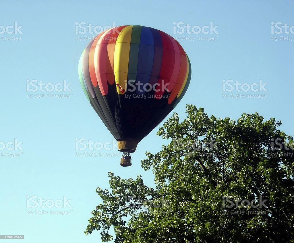 Taking off between the trees. royalty-free stock photo