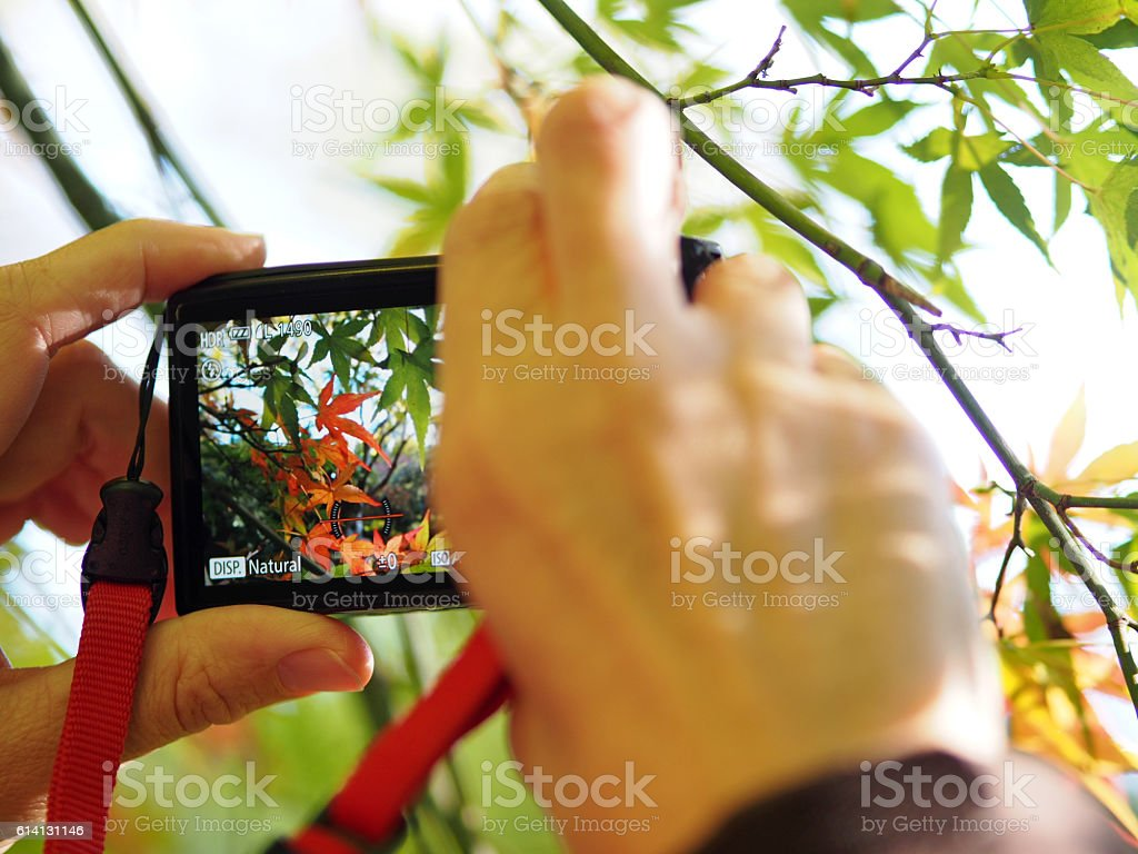 Taking Pictures of Colorful Fall Leaves and Foliage stock photo