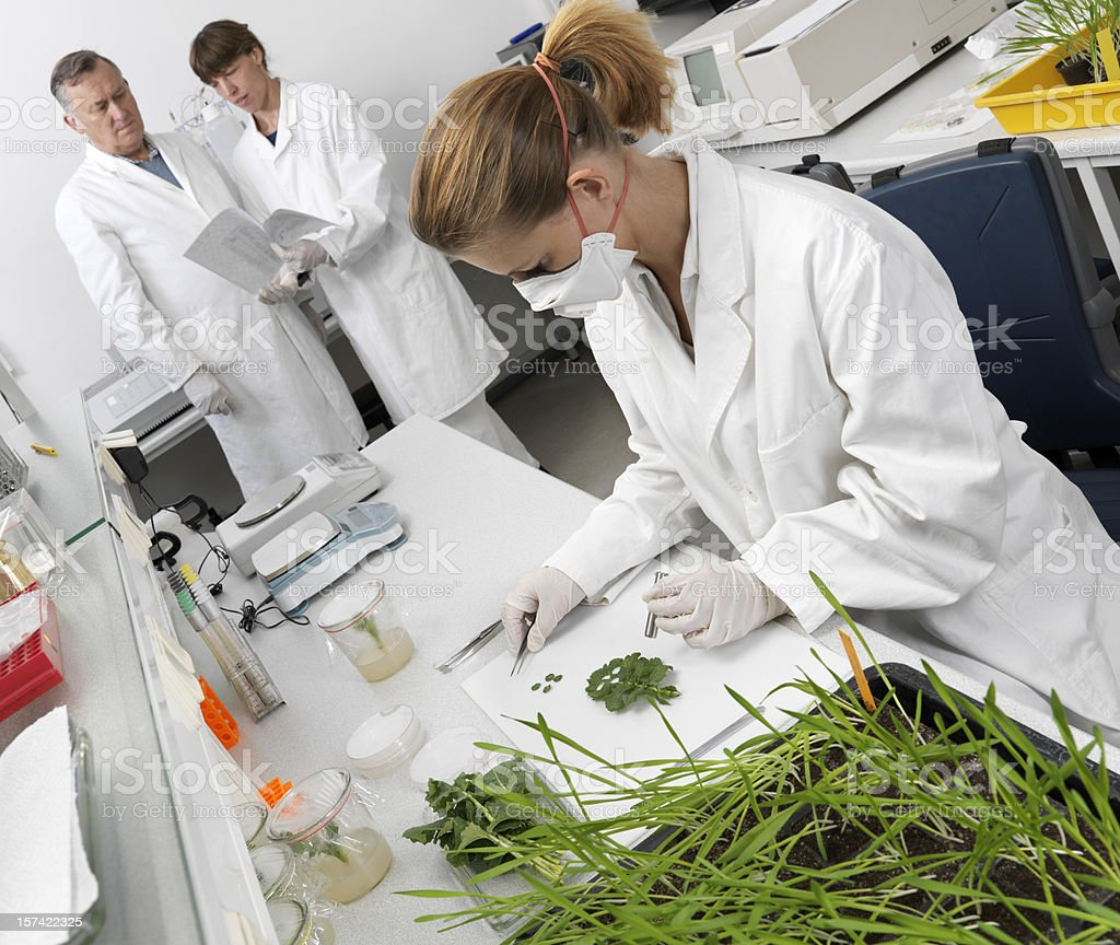 Taking plant samples royalty-free stock photo