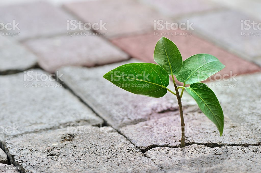 taking root royalty-free stock photo