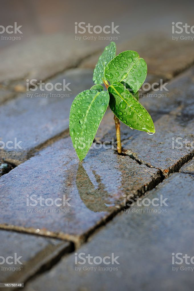 taking roots royalty-free stock photo