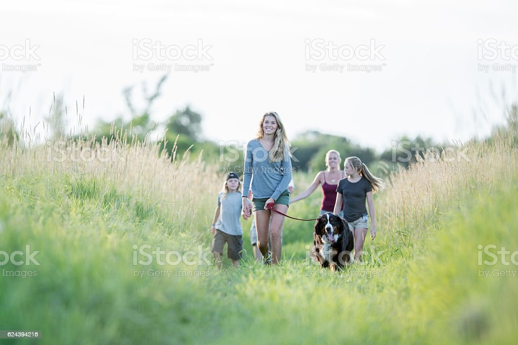 Taking the Dog on a Walk stock photo