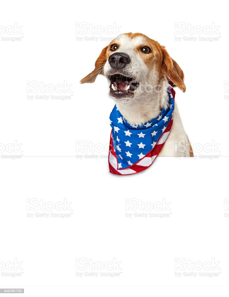Talking American Patriotic Dog With Banner stock photo