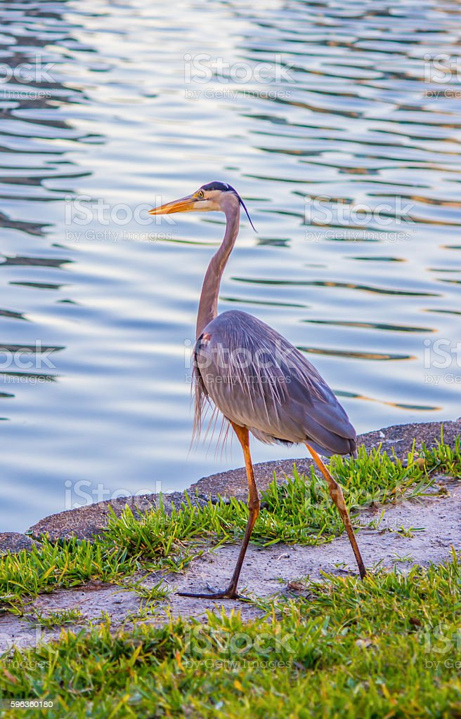 Tall Bird royalty-free stock photo