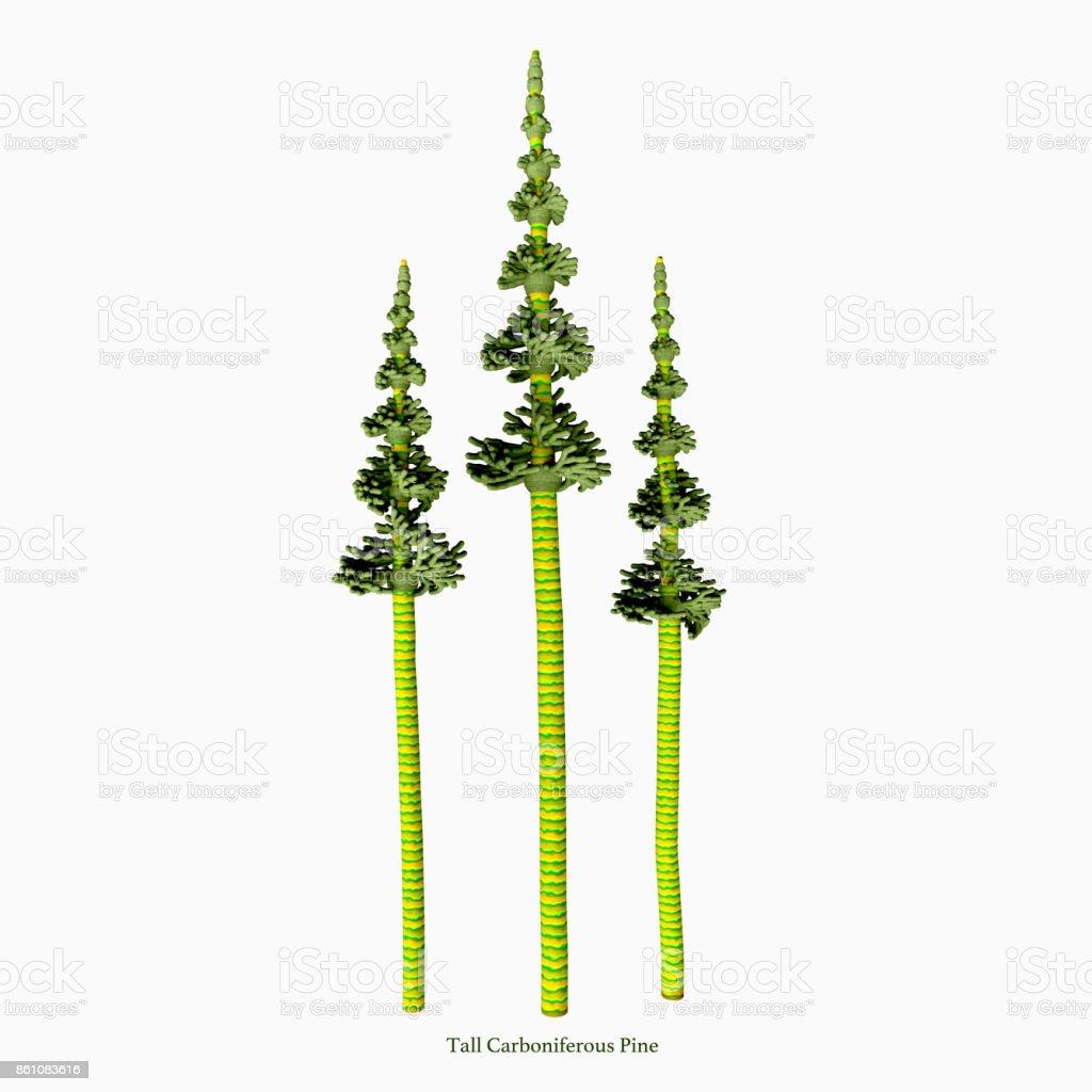 Tall Carboniferous Pine stock photo