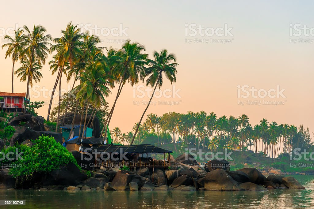 tall coconut palm trees and rocky shore stock photo