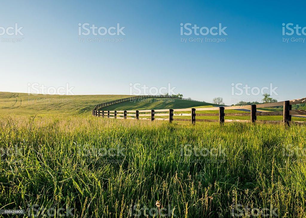 Tall Dewy Grass in Rolling Hills of Kentucky stock photo