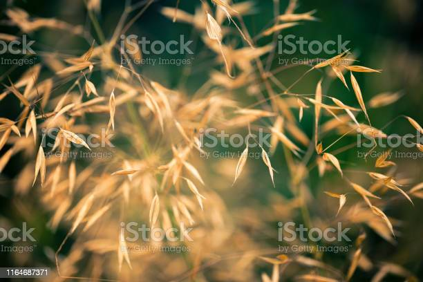 Photo of Tall Grass Abstract Nature Background