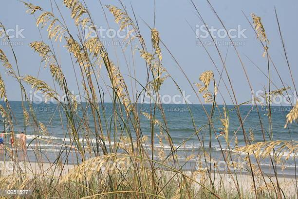 Photo of Tall Grass at The Beach