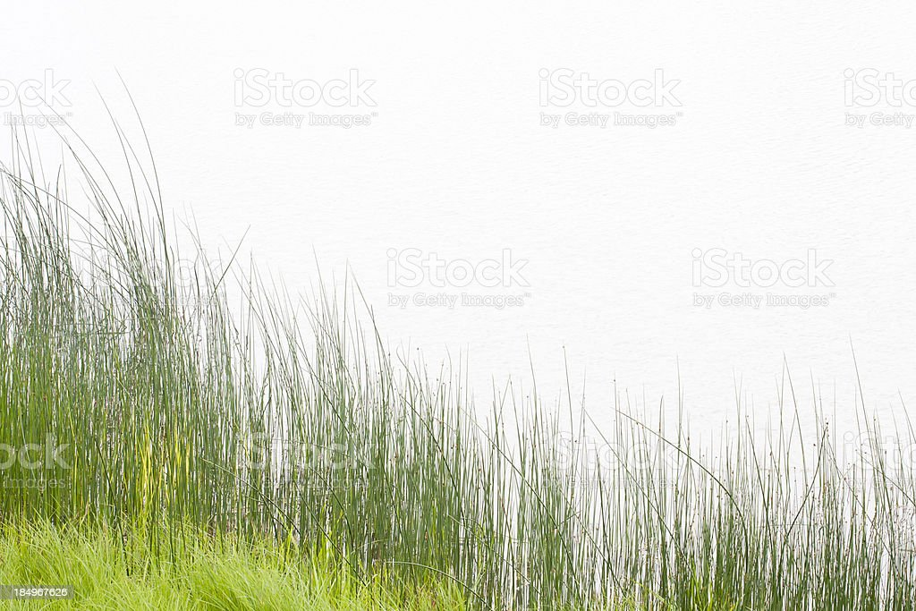 Tall Grass at Water's Edge stock photo