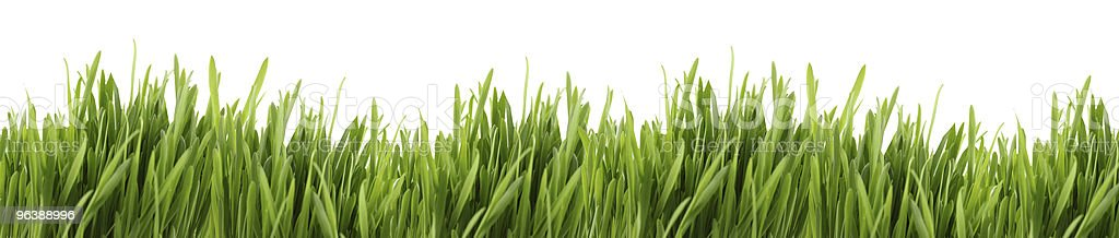 tall grass banner - Royalty-free Backgrounds Stock Photo