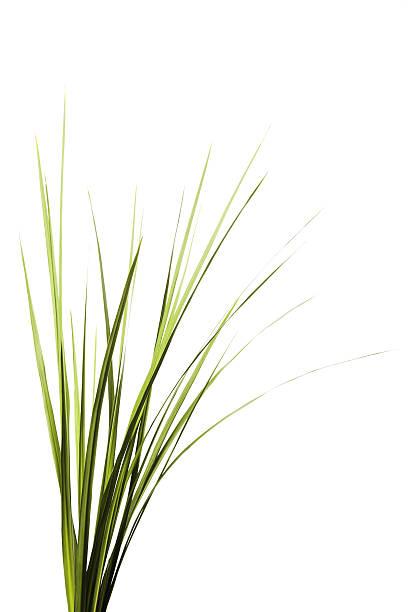 erba alta - filo d'erba foto e immagini stock