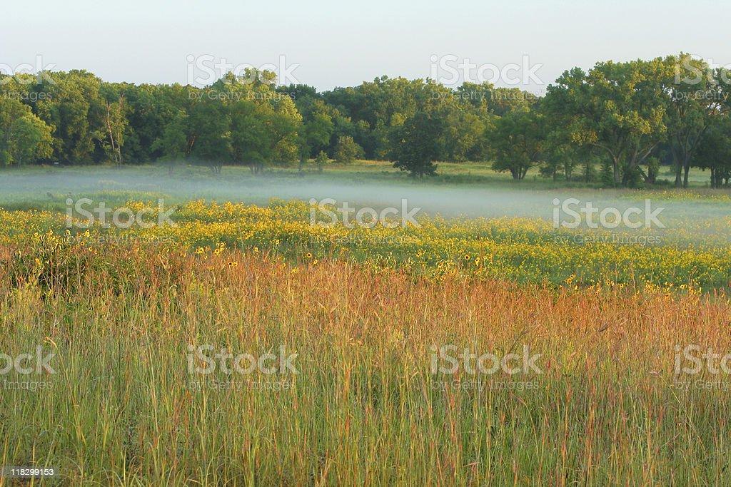 tall grass prairie, misty morning stock photo