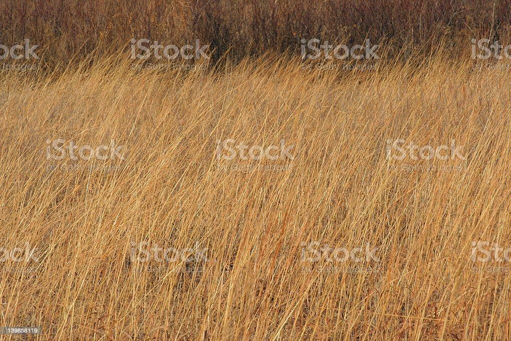 tall grass prairie stock photo