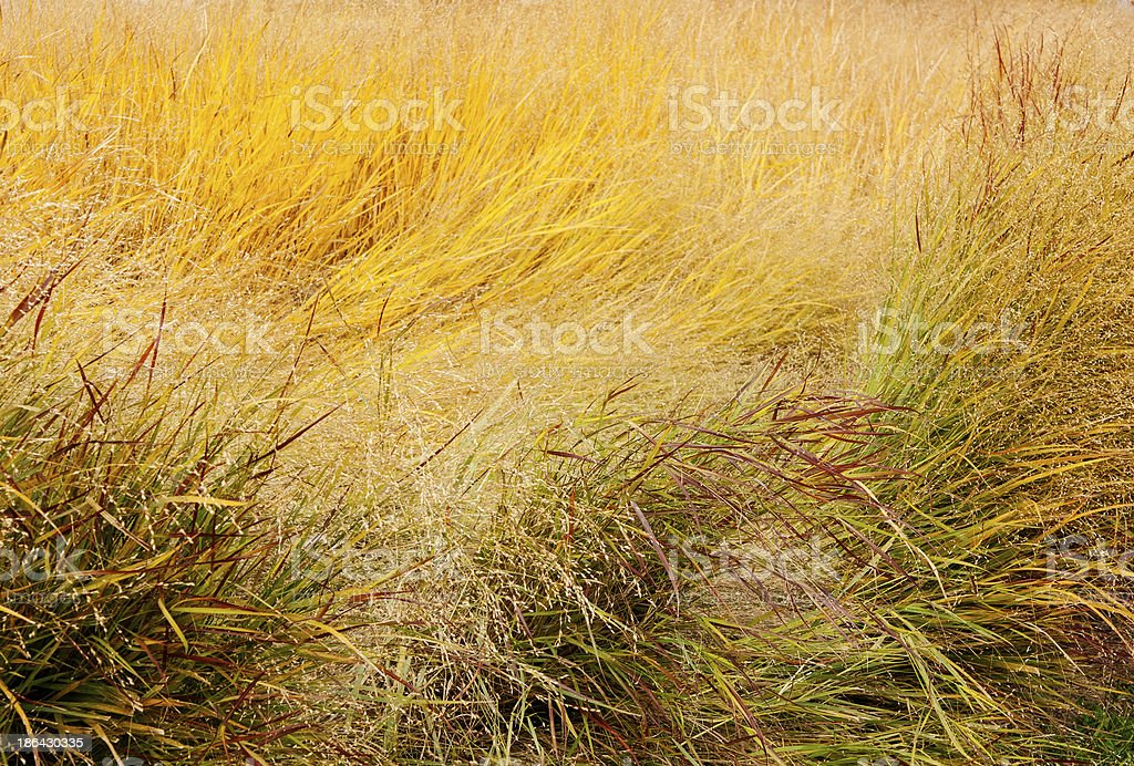 tall grass thickets at Fall stock photo