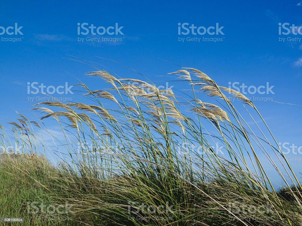 Tall Grasses stock photo