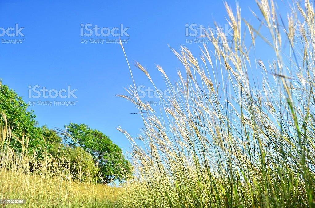 tall green grass with path toward tree royalty-free stock photo