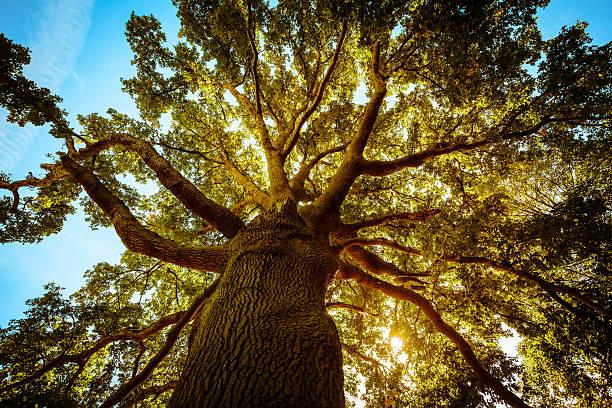 altos árvore verde na primavera - alto descrição geral - fotografias e filmes do acervo