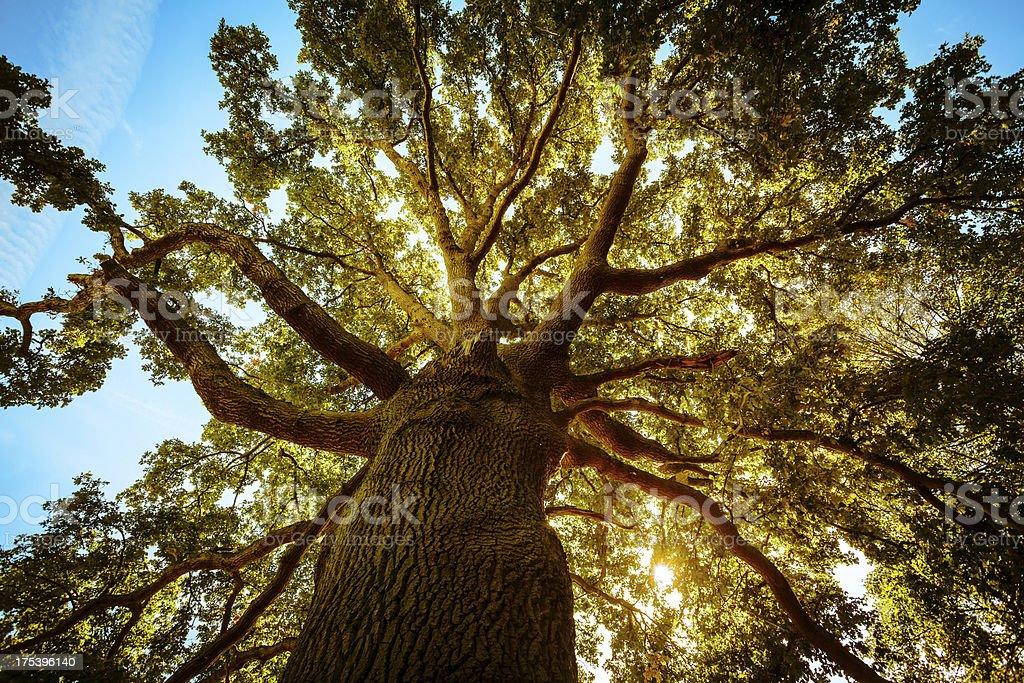 Altos árvore verde na primavera - foto de acervo
