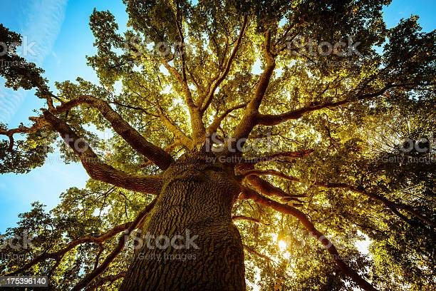 Photo of Tall Green Tree in Spring
