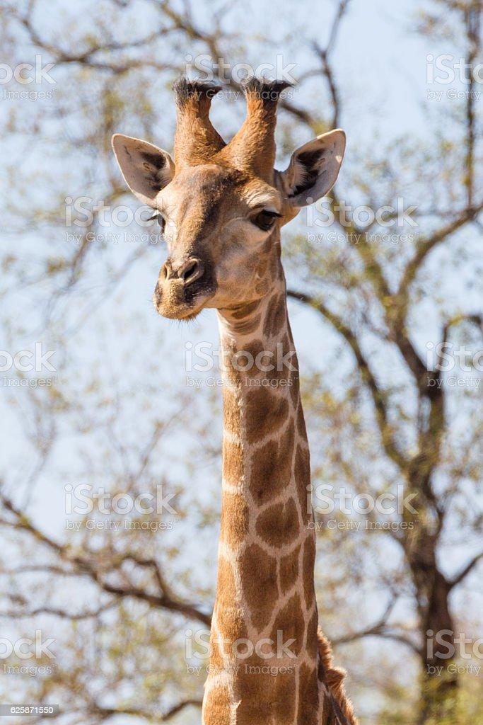 Tall Like Trees stock photo