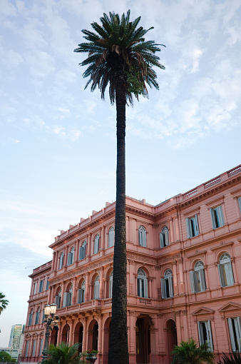 Tall palm tree against Pink House or Casa Rosada in Buenos Aires