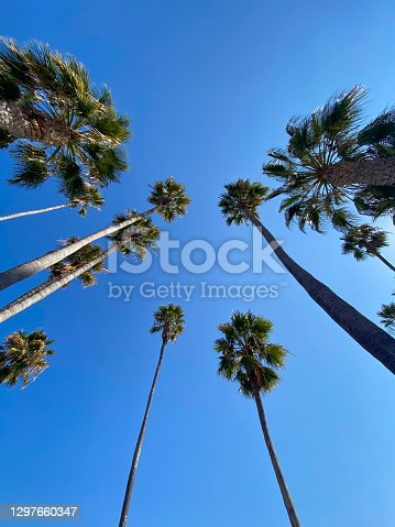 tall palm trees from a low angle