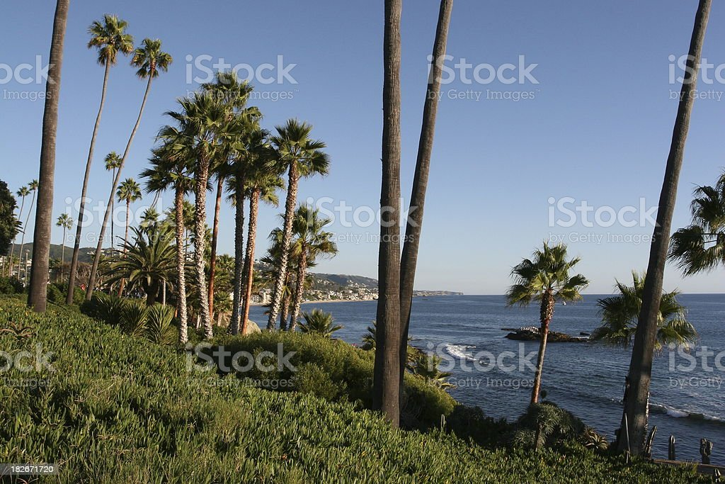 Tall palm trees in Laguna beach coast royalty-free stock photo