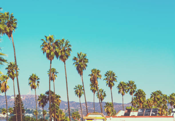 Tall palm trees with Hollywood sign on the background Tall palm trees with world famous Hollywood sign on the background, Los Angeles. Southern California, USA hollywood california stock pictures, royalty-free photos & images