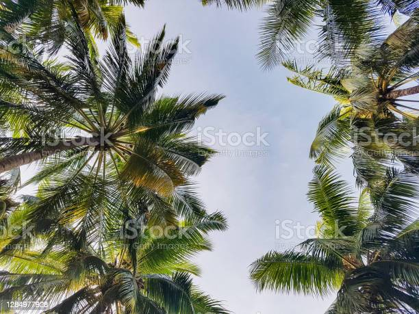 Photo of Tall palms above