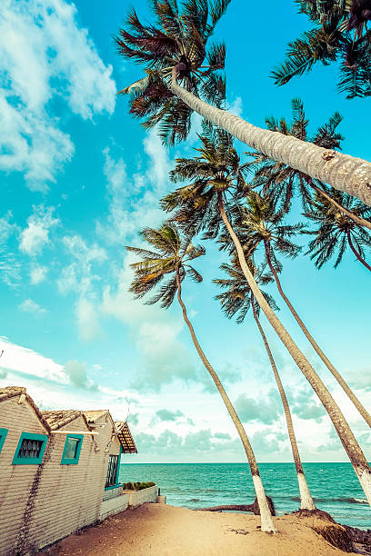 Tall palms on the beach of Natal, Brazil stock photo