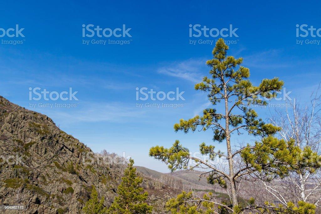 alto de pinheiro no fundo de uma grande montanha - Foto de stock de Arte royalty-free