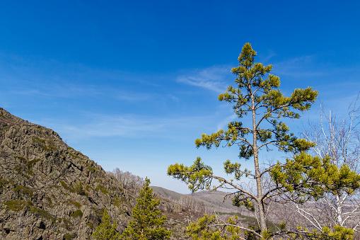 Foto de Alto De Pinheiro No Fundo De Uma Grande Montanha e mais fotos de stock de Arte